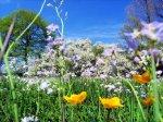 Тема 10 «Весна. Цветы»